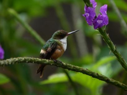 Costa Rica 2013 219