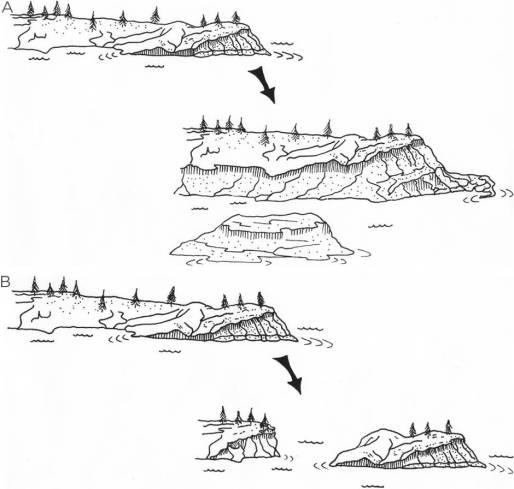 Schematic representation of the formation of a generic island de novo and by fragmentation. (A) In this example, lowering sea or lake levels expose a new habitat patch—a small island without any preexisting terrestrial biota. As with all islands, the biota gradually develops from two classes of organism: inter-patch dispersers coming from similar habitat elsewhere and matrix-derived species coming from the surrounding habitat. (B) Here, the fragment becomes isolated by subsidence, with the matrix habitat (in this case, water) surrounding the habitat patch. The fragment biota is initially dominated by relictual organisms (represented by trees in this example), with matrix-derived and inter-patch disperser taxa adding to the fragment biota. Illustration by Margaret J. Watson.